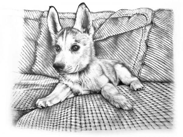 Black and white dog drawing created in graphite pencil