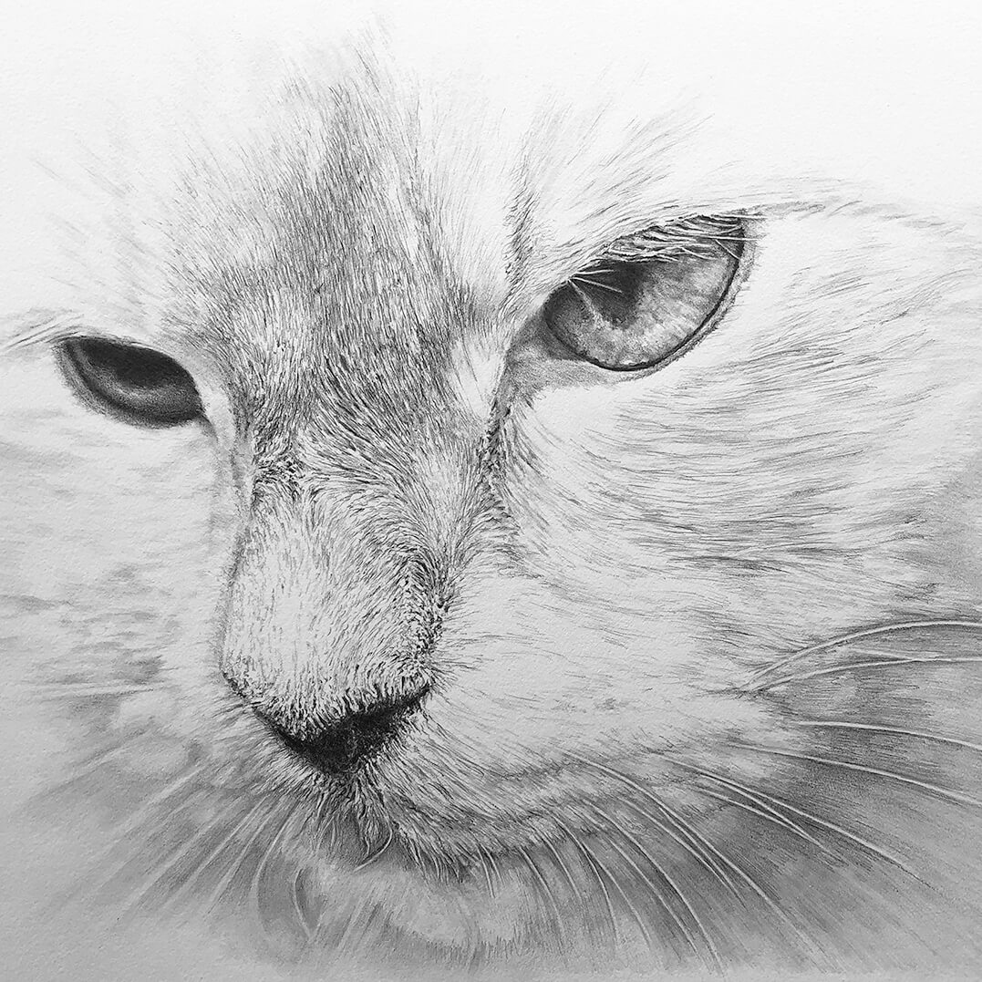 close up of black and white cat drawing