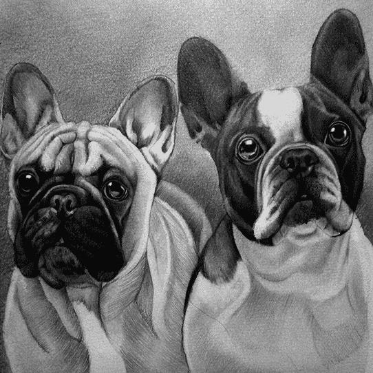 french bulldog pet portraits in pencil