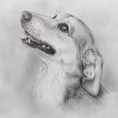 HOW DO I ORDER A PET PENCIL PORTRAIT DRAWING?