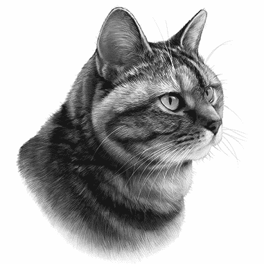 black and white bengal cat drawing