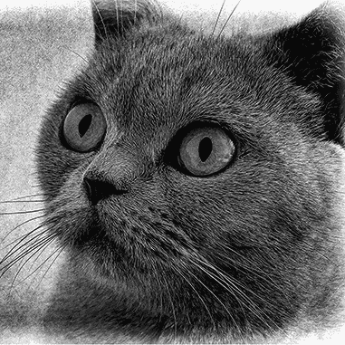 black and white cat drawing