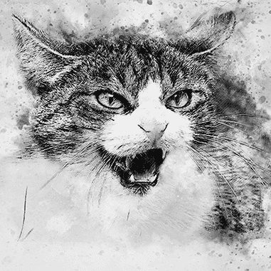black and white cat pencil drawing
