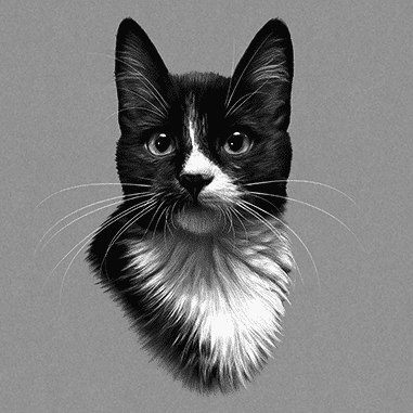 snowshoe cat drawing in black and white