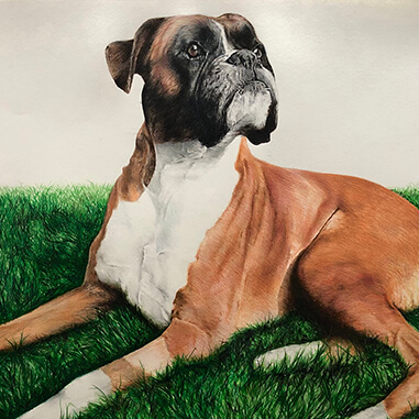 PET PORTRAITS FROM PHOTOGRAPHS