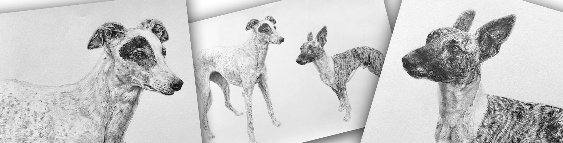 Pencil Pet Portraits in Black and White